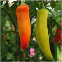 Pepper, Chilli - Hungarian Wax