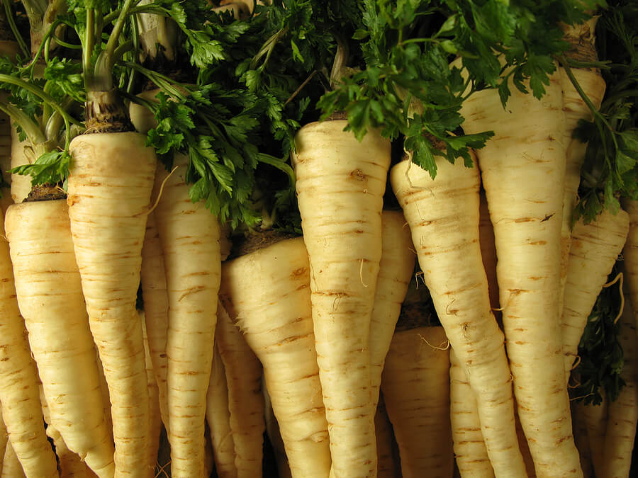 Parsley root picture