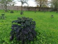 Kale Red & Green Palm